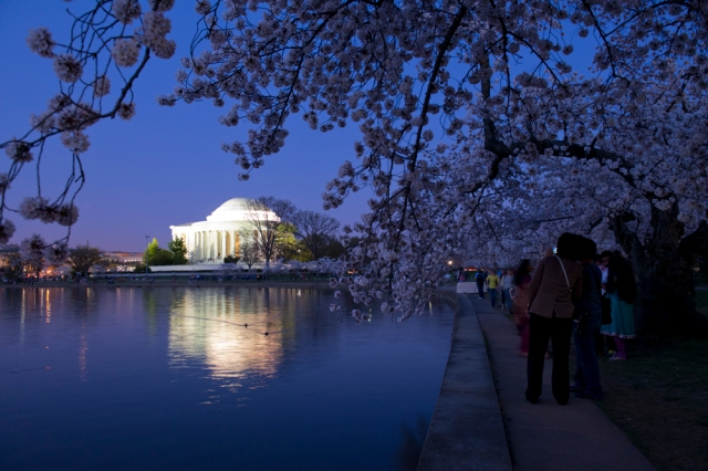A dusk shot of the Jefferson Memorial framed by cherry blossoms.