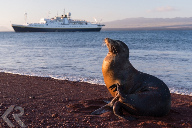 Galapagos sea lion at sunset