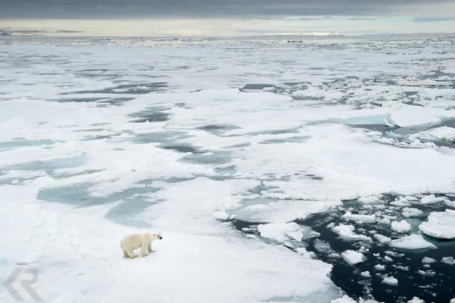 krista-rossow-polar-bear-arctic
