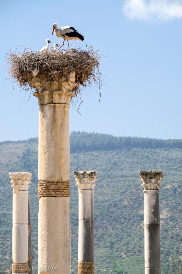 krista-rossow-morocco-volubilis-cranes-columns