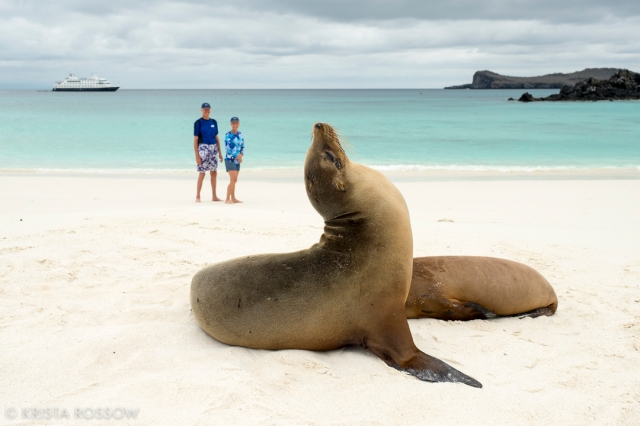 18-krista-rossow-galapagos-sea-lions