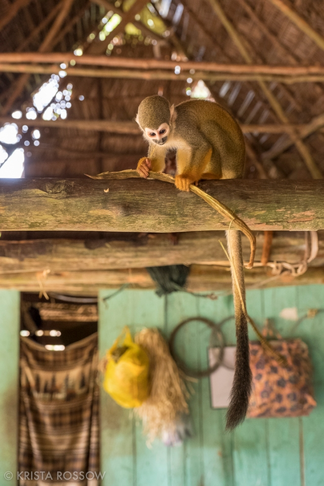 15-Krista-Rossow-Peru-Amazon-squirrel-monkey