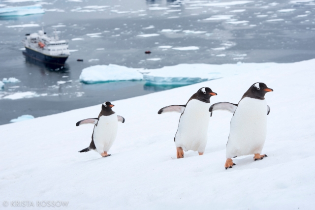 krista-rossow-antarctica-photography-penguins-ship