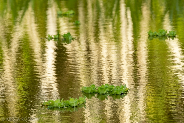 03-krista-rossow-peru-amazon-reflection