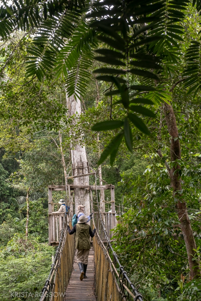 15-krista-rossow-peru-amazon-canopy-walk