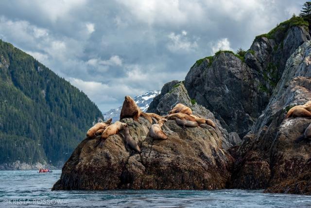 Krista-Rossow-Workshops-Alaska